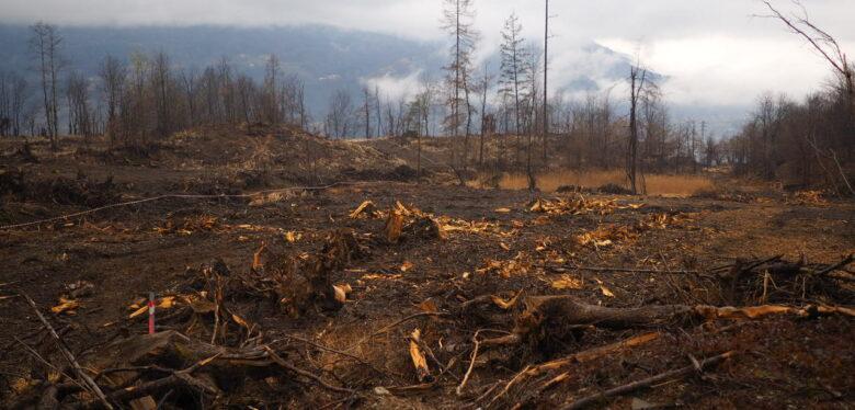 Foto di alberi caduti